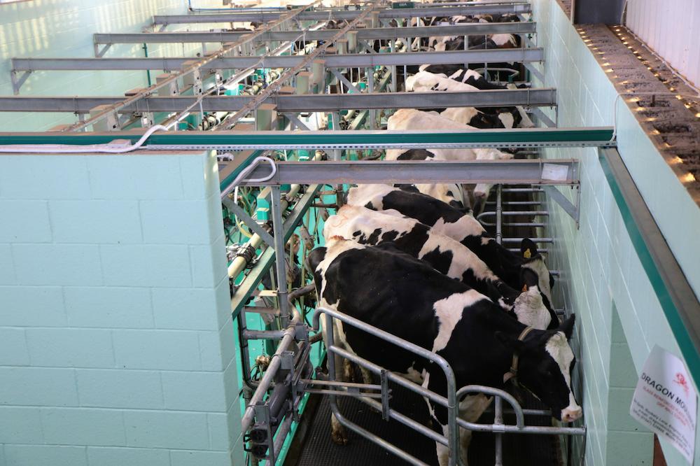 牛乳にエストロゲンが含まれている理由